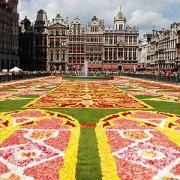 Bruxelles tapis fleurs 2010 1